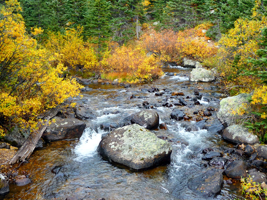 Fall colors along Middle St Vrain Creek