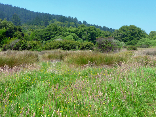 Olema Valley Trail near Dogtown