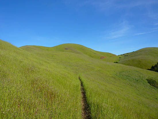 The Coastal Trail runs through open hills and dense redwood forests