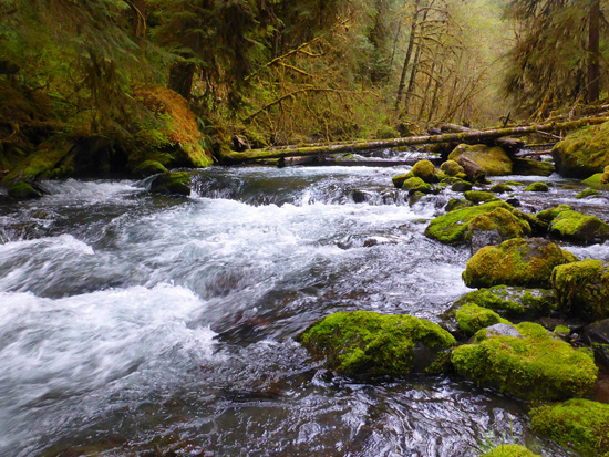 Barnes Creek flows into Lake Crescent in Olympic National Park