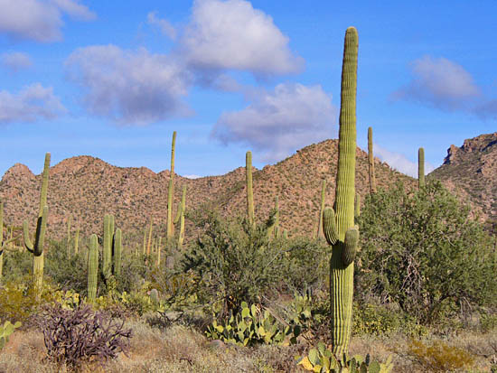 The Desert Discovery Trail winds through archetypal Sonoran flora